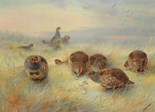 archibald thorburn a frosty dawn paintings