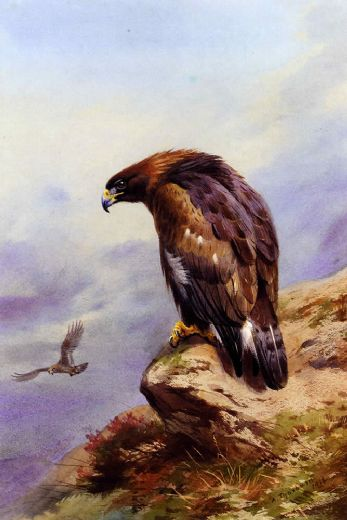 archibald thorburn a golden eagle painting