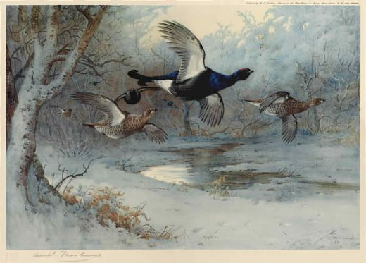 archibald thorburn blackcock through the silver birches painting