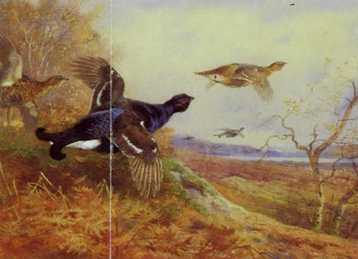 archibald thorburn blackgame in flight paintings