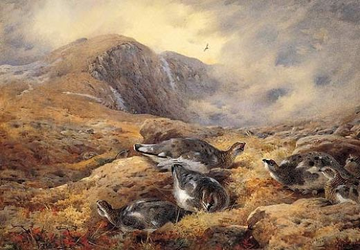 archibald thorburn danger aloft prints