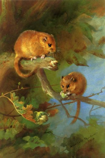 archibald thorburn dormice painting