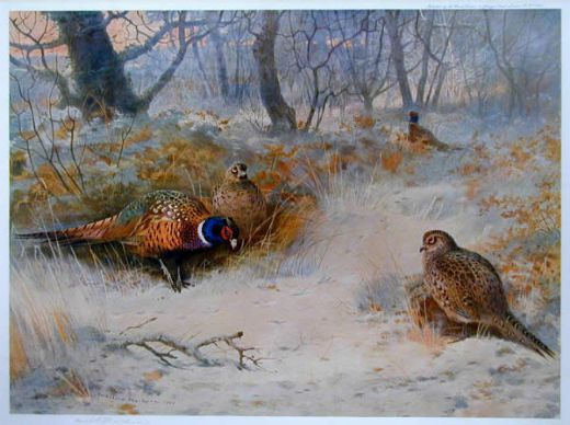 archibald thorburn frost in the coverts painting
