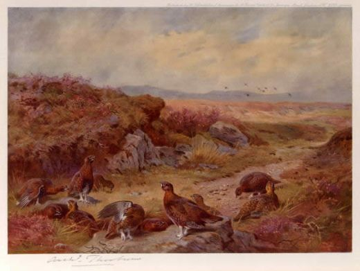 archibald thorburn grouse on the peat bogs paintings