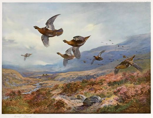 archibald thorburn grouse over the burn painting