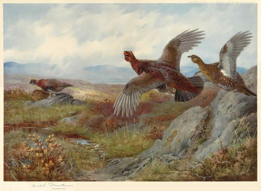 archibald thorburn grouse over the moor painting