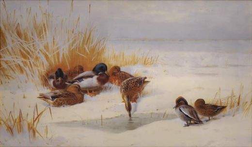 archibald thorburn mallard and teal painting