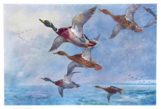 archibald thorburn mallard in squally weather paintings