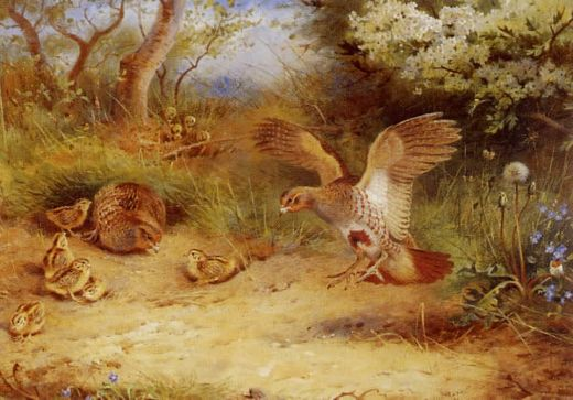 archibald thorburn summer partridge and chicks paintings