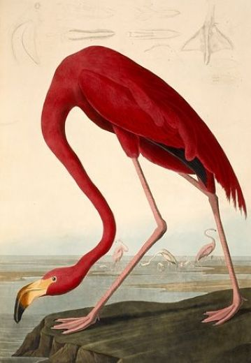 Famous Audubon Paintings