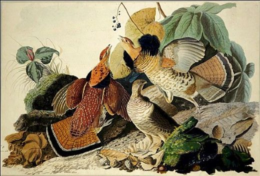 john james audubon ruffled grouse painting