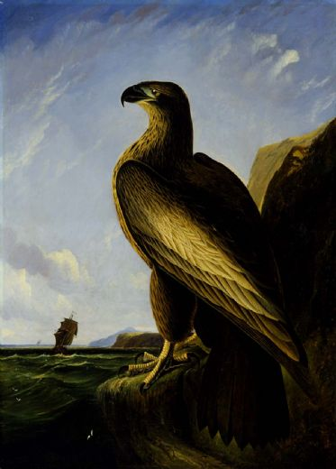 john james audubon washington sea eagle paintings