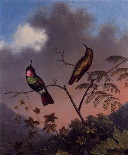 martin johnson heade brazilian ruby hummingbirds paintings