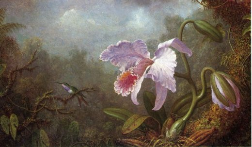 martin johnson heade hummingbird and orchid painting