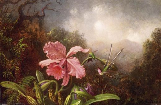 martin johnson heade two hummingbirds by an orchid painting