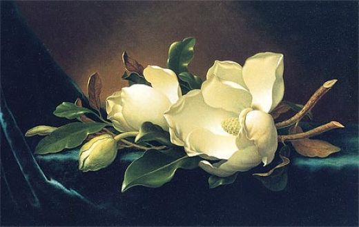 martin johnson heade two magnolias and a bud on teal velvet paintings