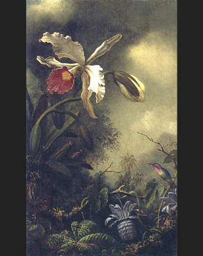 martin johnson heade white orchid and hummingbird painting