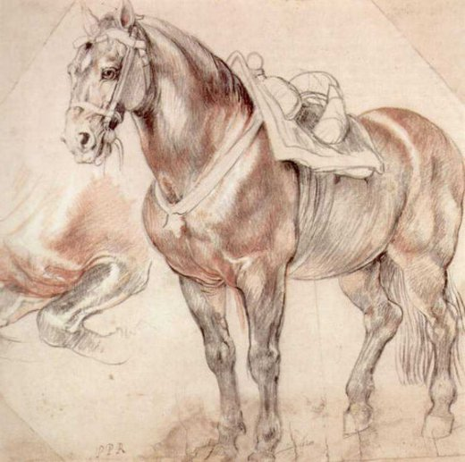 peter paul rubens etude of horse painting