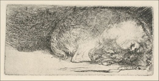 rembrandt van rijn the little dog sleeping painting