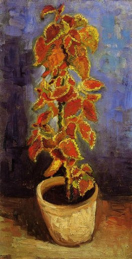 vincent van gogh coleus plant in a flower pot painting