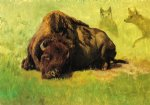 bison with coyotes in the background by albert bierstadt painting
