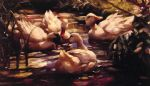 alexander koester ducks in a forest pond painting