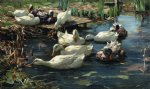 ducks in a quiet pool by alexander koester paintings