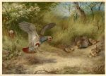 archibald thorburn partridges and young painting
