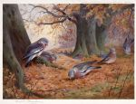 wood pigeon on beech mast by archibald thorburn painting