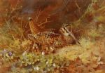 woodcock and chicks by archibald thorburn painting