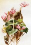 cyclamen ii by charles demuth painting