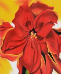georgia o keeffe red amaryllis painting