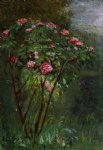 gustave caillebotte rose bush in flower painting