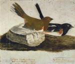 towhee bunting by john james audubon painting
