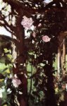 rose paintings - a rose trellis by john singer sargent