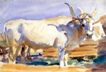 white ox at siena by john singer sargent paintings-30893
