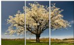 landscape blossom painting 77647