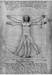 vitruvian man study of proportions from vitruvius s de architectura by leonardo da vinci painting