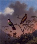 martin johnson heade brazilian ruby hummingbirds painting
