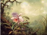martin johnson heade heliodore s woodstar and a pink orchid paintings