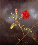 martin johnson heade red rose with ruby throat painting 29372