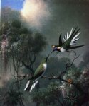 two hummingbirds sun gems heliactin cormuta by martin johnson heade painting