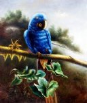 original paintings a blue parrot standing on a branch painting