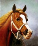 original the head of a horse 2 painting 28438