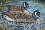 original canada geese birds photos oil paintings