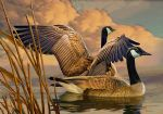 original canadian geese canada birds painting-86454