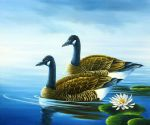 original goose canada birds painting-86471