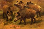 rosa bonheur four boars in a landscape painting 25322