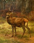 stag in an autumn landscape by rosa bonheur painting