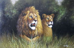 african lion family art
